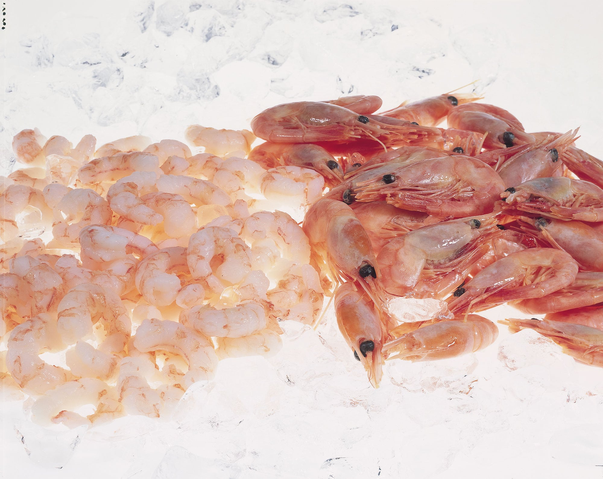 coldwater-prawns-3