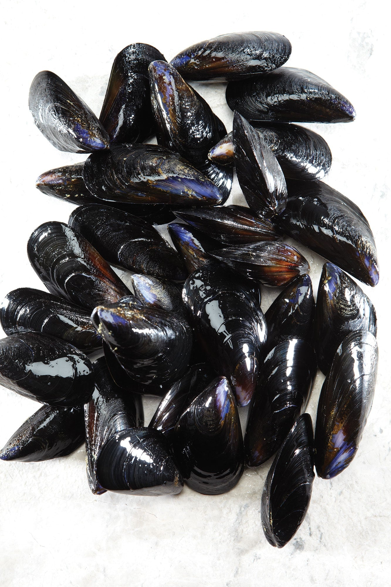 mussels-cockles-clams-welks-5