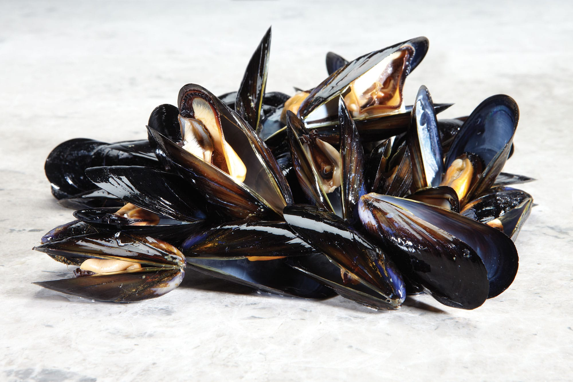 mussels-cockles-clams-welks-7